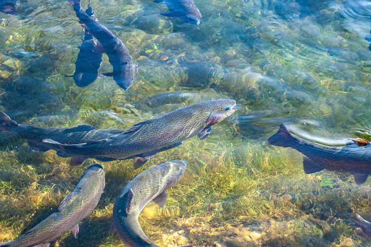 Fish Farming In Kenya