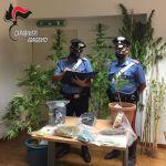 Piante di cannabis coltivate  nelle campagne di Cammarata: arrestato 27enne