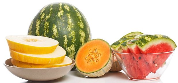 Diseases of melon