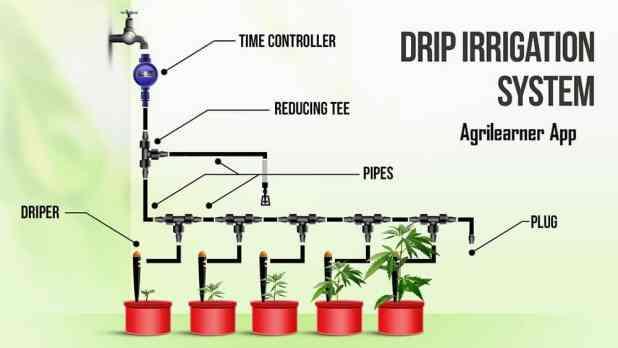 Drip irrigation fertigation