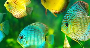 Classification of fish culture on the basis of number of species