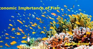 Economic Importance of Fish