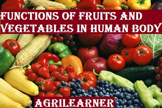 Horticultural crops and Human Nutrition