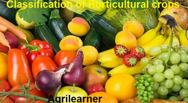 Classification of Horticultural crops