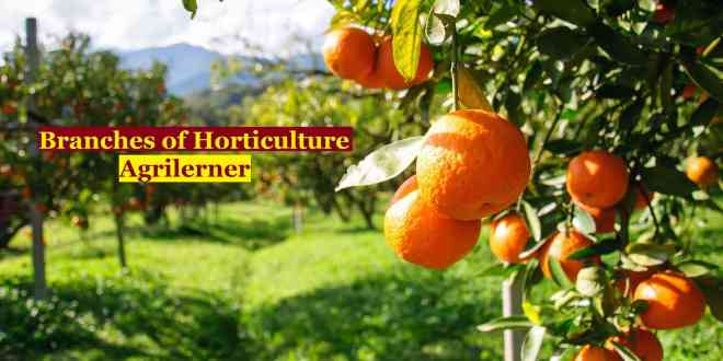 Branches of Horticulture