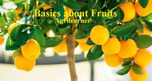 Basics about Fruits