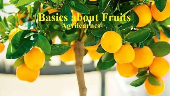 Basics about Fruits