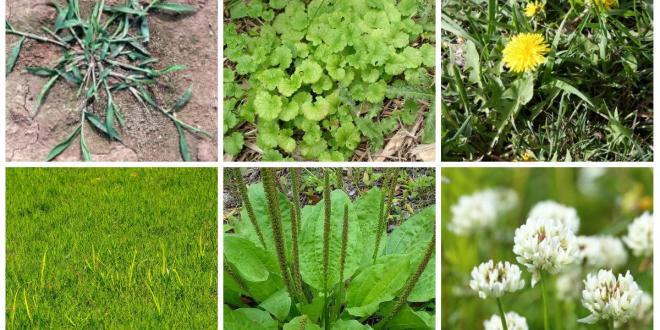 Basics of weed management