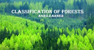 Classification of Forests