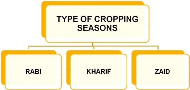 Crop Seasons in India