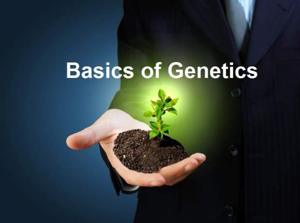 Basics of Genetics