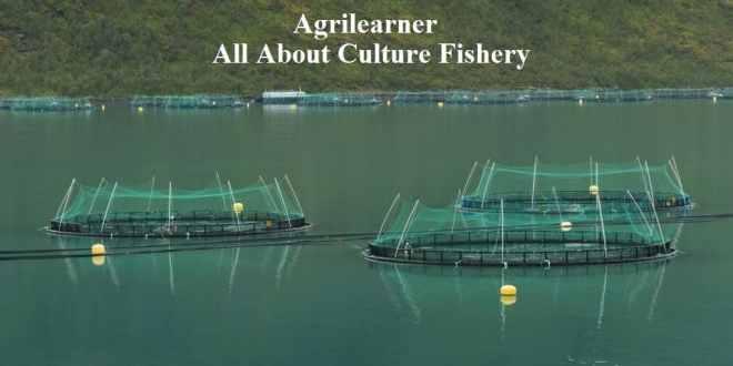 Culture Fishery