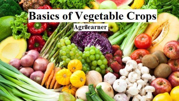 Basics of Vegetable Crops