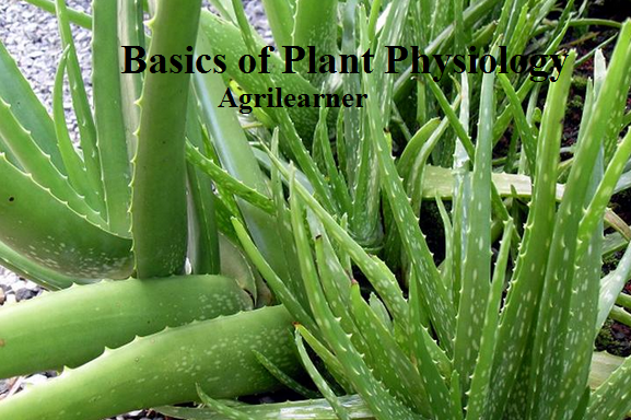 Basics of Plant Physiology