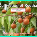 Cultivation of Reetha