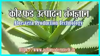 कोरफड उत्पादन तंत्रज्ञान