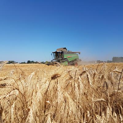 Cereali: campagna sorprendente con quotazioni in rialzo ...