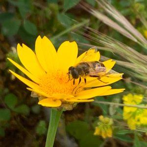 api nei campi salute nei vegetali
