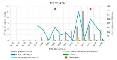 Figura 4 – Evolução do número de capturas diárias na armadilha delta de adultos de Tuta absoluta e estragos causados pelas larvas nas plantas de tomateiro medidos em número de galerias nas folhas e número de frutos com galerias em 30 plantas casualizadas semanalmente de forma aleatória e 2 tratamentos com s.a. Coragen® SC 200 g/L na estufa do Testemunha 1