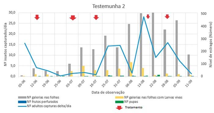 Figura 5 – Evolução do número de capturas diárias na armadilha delta de adultos de Tuta absoluta e estragos causados pelas larvas nas plantas de tomateiro medidos em número de galerias nas folhas e número de frutos com galerias em 30 plantas casualizadas semanalmente de forma aleatória e os 5 tratamentos na estufa do Testemunha 2. As s.a. Affirm® (Syngenta) (sob a forma de sal de benzoato) 0,85% (p/p) e Explicit WG® comercializado pela BASF WG 30 % (p/p) de indoxacarbe foram usadas em 2 tratamentos cada e por fim um tratamento com Coragen® comercializado pela Bayer suspensão concentrada (SC) com 200 g/L de clorantraniliprol