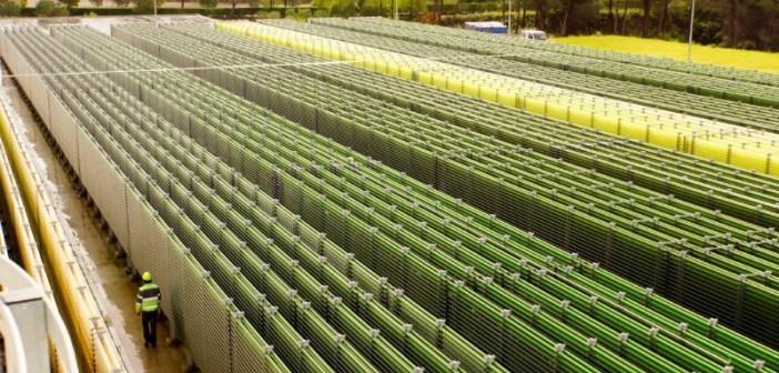 Secil-unidade-de-produção-de-microalgas-Vida-Rural