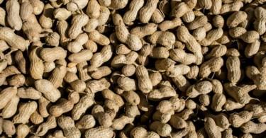 Amendoim - Vida Rural (3)