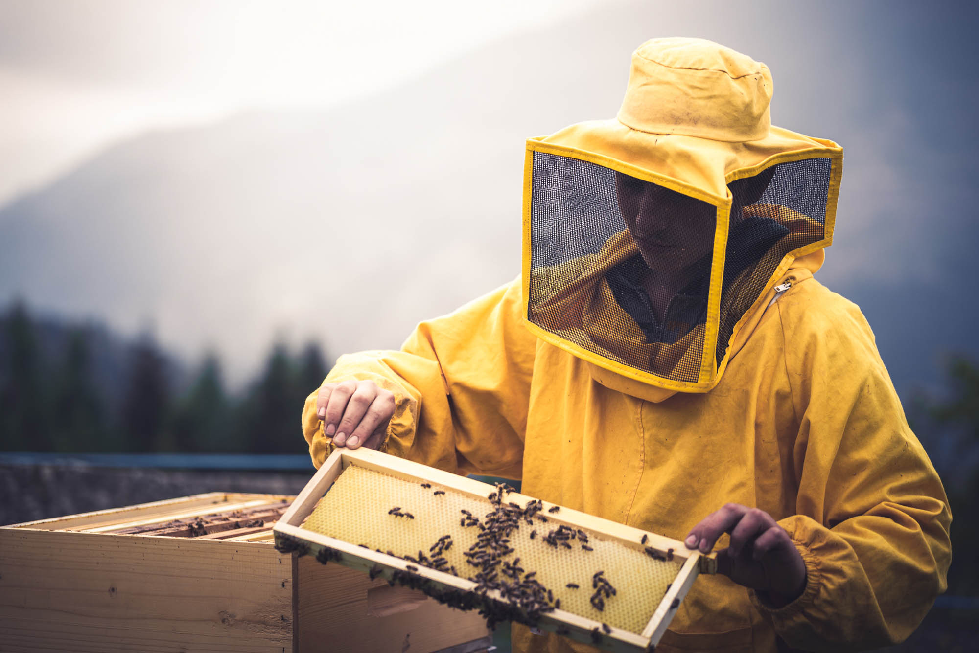 The art of Beekeeping at the Agritur Dalaip dei Pape
