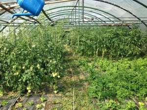 Agricoltura - Interno Serra...