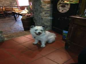 """Agriturismo Al-Marnich - """"Dogs Welcome"""""""