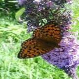 Natura Circostante - Biodiveristà