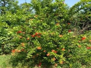 Natura Circostante - Flora Locale