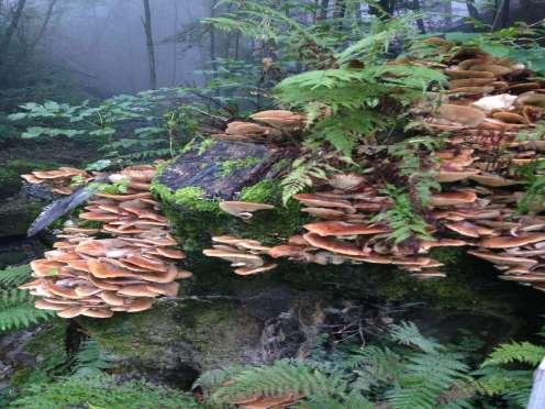 Natura Circostante - Funghi su Tronco