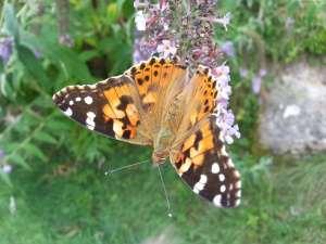 Natura Circostante - Una Bellisima Monarca