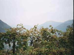 Prodotti Agricoli - Uva Fragola