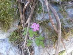 Natura-Circostante-Violetta-Invernale