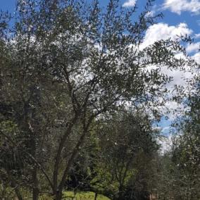 Agriturismo-il-Macereto-fogallery4