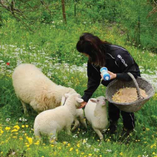 fattoria-didattica-agriturismo-il-macereto-mob1