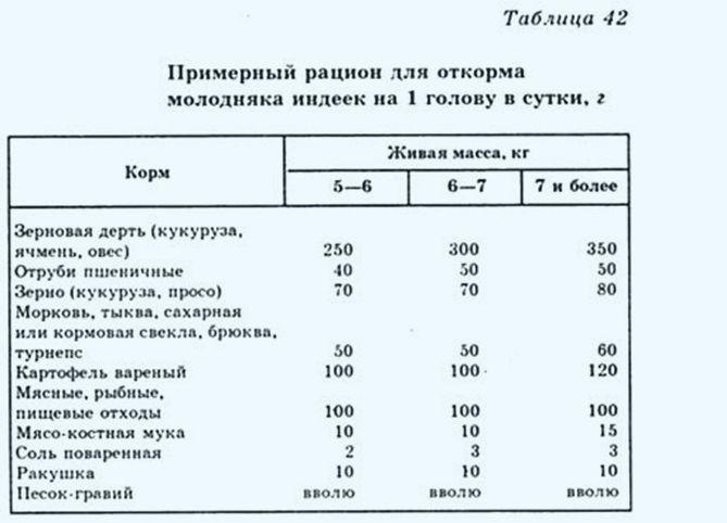 Таблица рациона откорма индюков перед забоем