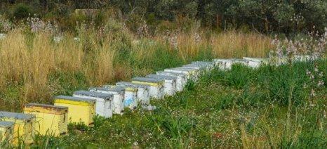 Η κρίση εμποδίζει την εξωστρέφεια για το ΠΟΠ μέλι Ελάτης Μαινάλου Βανίλιας