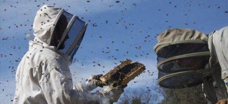 Μελισσοκόμος από την Αργολίδα καταδικάστηκε σε 10 μήνες φυλακή για το θάνατο γυναίκας