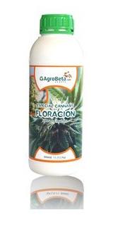 cannabis-floracion