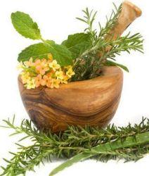 5 Plantas Medicinales para Cultivar en el Huerto: El Farmahuerto