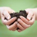 Abono orgánico. 10 tipos de fertilizantes ecológicos para las plantas