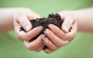 Tipos de Abono Orgánico: 10 fertilizantes ecológicos para las plantas