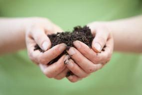 Sustratos ecológicos y fertilizantes naturales para las plantas del huerto