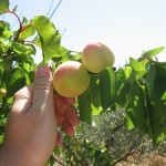 II Congreso de Agricultura Ecológica Urbana y Periurbana