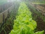 Métodos de control de Plagas y Enfermedades en huertos ecológicos