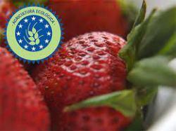 Alimentación Ecológica y Consumo responsable. Hacia una economía más verde