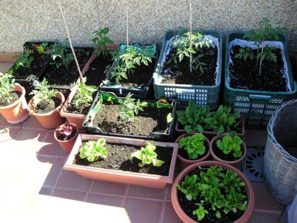Huerto Ecológico En Casa Qué Se Necesita Para Empezar A Cultivar