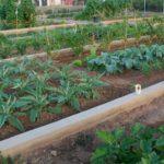 Alquilar huerto en Valencia… que mejor sitio que en Tomba L'Olla